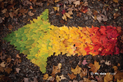 Sample image: Arrow made of multicolored leaves