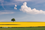 Sample image: Field of yellow flowers