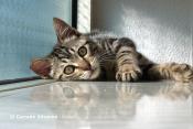 Sample image: Cat lying in corner